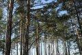 Meža īpašnieku kooperatīviem būs pieejams ES atbalsts attīstībai