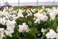 Ziedu rota pilsētai (video)