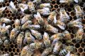 Latgalē vīrieti sadzeļ vairāk nekā 30 bites