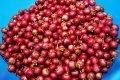 Asociācija: dzērveņu raža šogad Latvijā būs sliktāka nekā pērn
