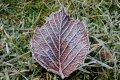 Pirmo reizi kopš marta gaisa temperatūra Latvijā noslīdējusi līdz -9 grādiem