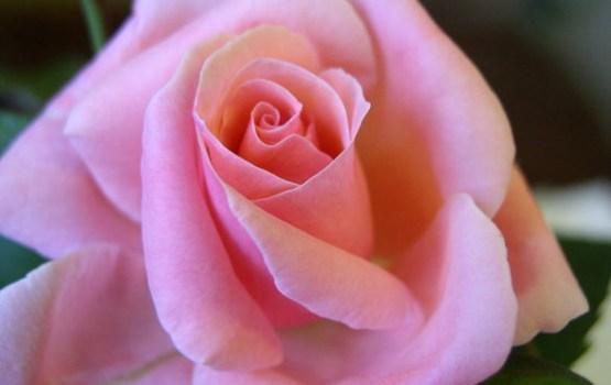 Šonedēļ populārākie vārdi – Valentīna un Aivars