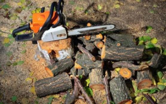Plānotie koku nozāģēšanas darbi Daugavpilī