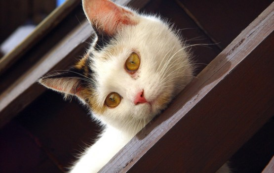Glābēji Daugavpilī no 1,5 metrus dziļas akas izglābuši kaķi