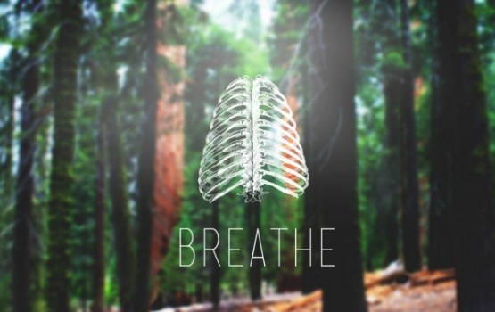 10 interesanti fakti par plaušām