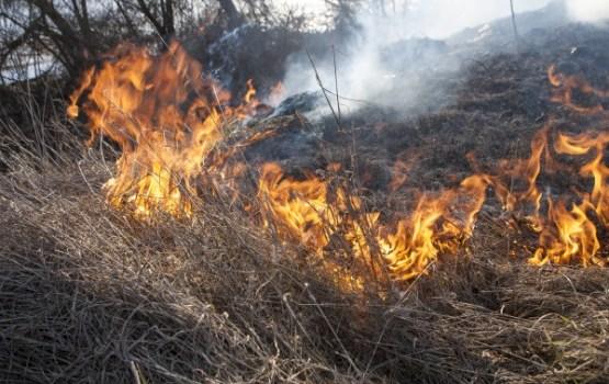 Kūlas ugunsgrēku skaits šajā sezonā pārsniedzis tūkstoti