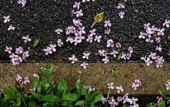 Piektdien gaidāms lietus; dažviet iespējams pērkona negaiss