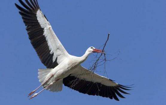 """2. jūnijā notiks konkursa """"Mūsu novada putni"""" uzvarētāju apbalvošana"""