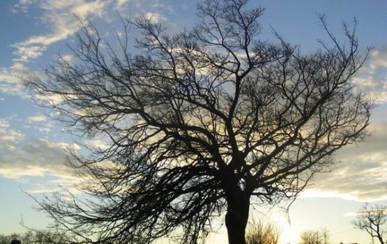 Piektdien un īpaši sestdien vējā var lūzt daudz koku