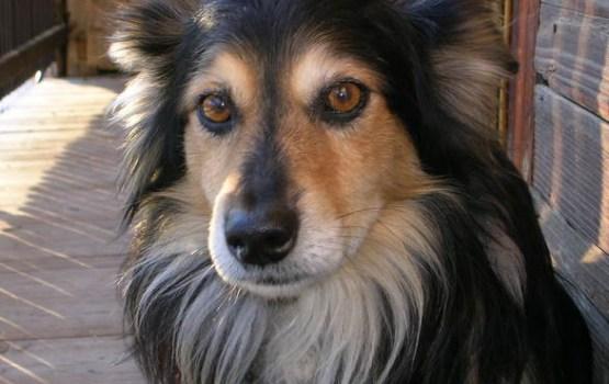 Kāpēc sunim vajadzīgas ūsas