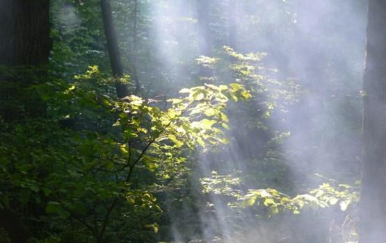 Sibīrijas taigas ugunsgrēku dūmi nonākuši arī Latvijā