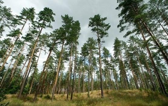 Pētījums: Latvijas mežu platība ir dubultojusies