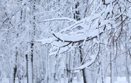 Ceturtdienas rītā Latvijas austrumos gaidāms sals līdz -9 grādiem