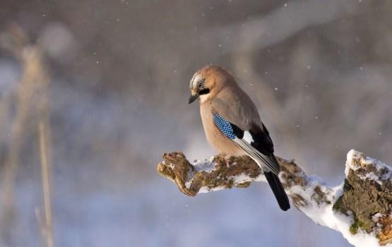 Janvāra sākumā var atgriezties ziema