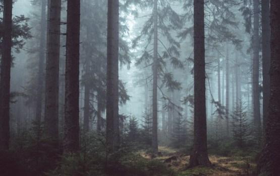 «Rīgas meži» par 49 670 eiro iegādāsies apvidus automašīnu