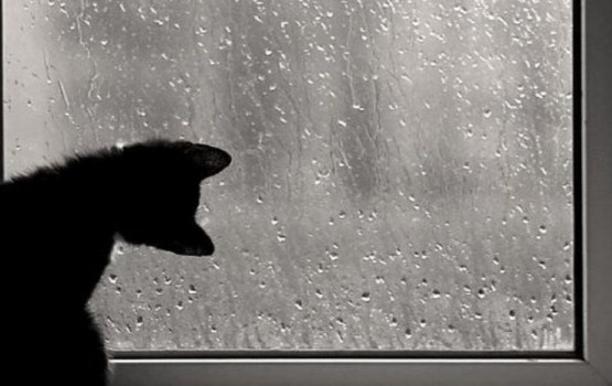 Ceturtdien Latvijā atgriezīsies mākoņains un lietains laiks