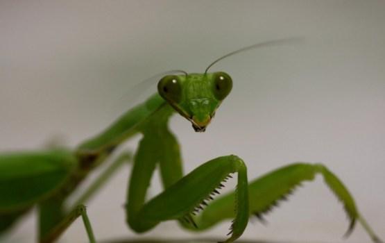 Par gada kukaini izraudzīts Eiropas dievlūdzējs