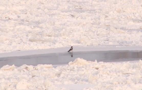 Daugavpils ūdenstilpes klāj ledus, taču atrasties uz Daugavas joprojām nav droši