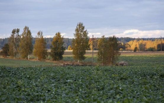 Lauksaimniekiem valsts subsīdijās šogad būs pieejami 8,7 miljoni eiro
