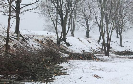 Sākušies koku izciršanas darbi Daugavpils cietoksnī