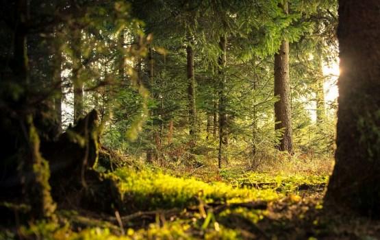 Apmēram 60 000 hektāru LVM pārvaldīto mežu konstatēti ES nozīmes biotopi
