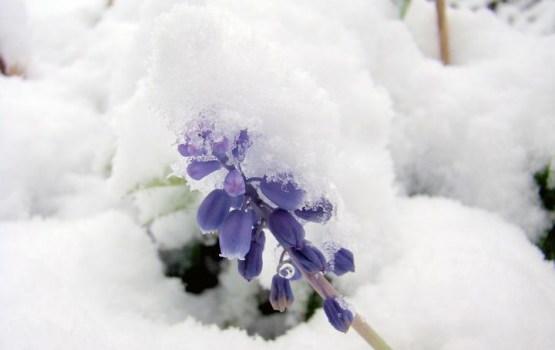 Labots 10.maija nacionālais aukstuma rekords