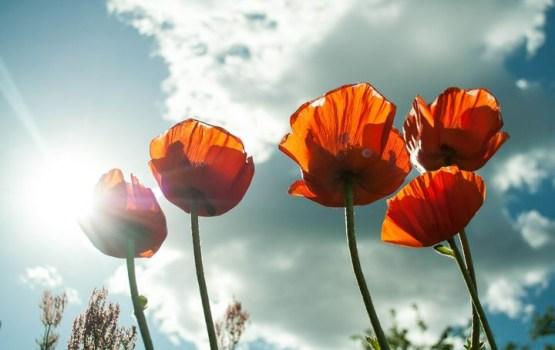 Svētdien saule gaisu sakarsēs līdz +28 grādiem, vējš kļūs brāzmains