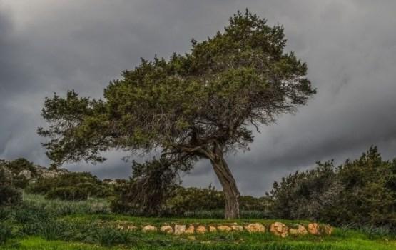 Trešdien no jauna pastiprināsies vējš un daudzviet īslaicīgi līs