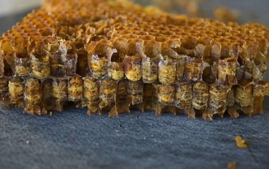 """Pediatre: """"Bišu maizē atrodams pat zelts un platīns..."""""""