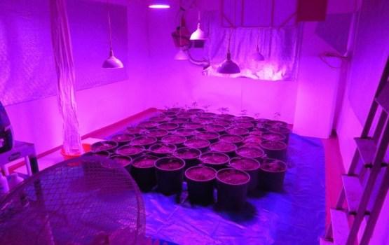 Varakļānu novadā likvidē kārtējo marihuānas audzētavu