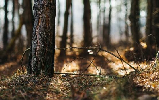 LMĪB: No meža apsaimniekošanas viedokļa šis gads ir bijis grūts