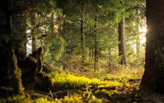 """Paziņojums par rekreācijas meža """"Daugavpils"""" apsaimniekošanas plānu"""