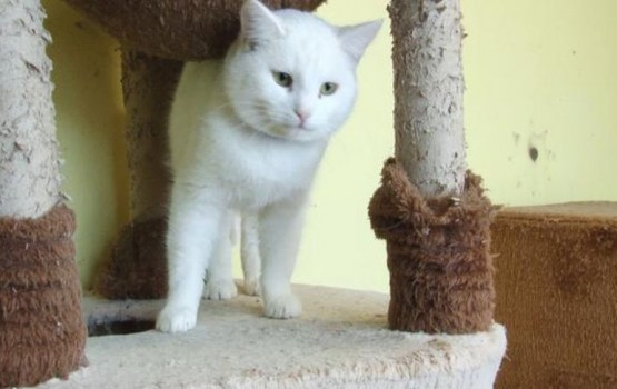 Daugavpils dzīvnieku patversmē savus saimniekus gaida 104 suņi un kaķi (VIDEO)