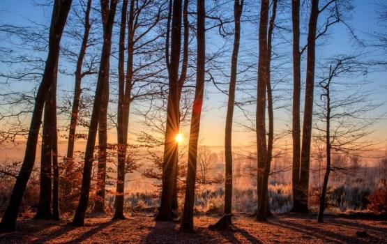 Iespēja pieteikties atbalstam mežsaimniecībā