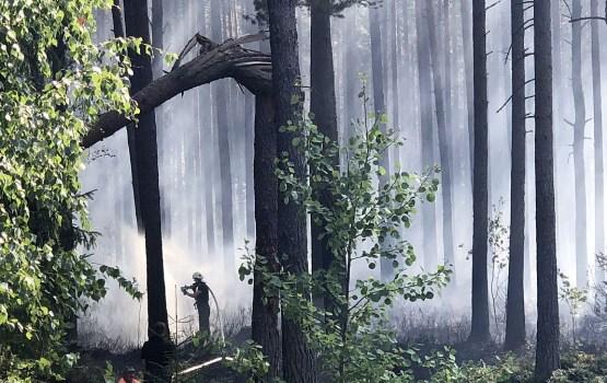 Par meža ugunsgrēku rezultātā nozarei nodarītajiem zaudējumiem vēl ir pāragri spriest