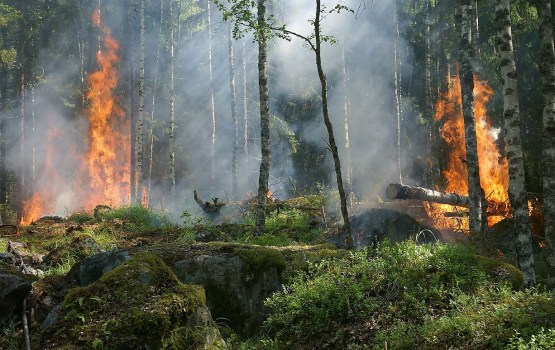 Cēsīs izcēlies plašs meža ugunsgrēks