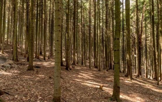 Latgales degradēto teritoriju atjaunošanai plāno piesaistīt vēl 29,5 miljonus eiro