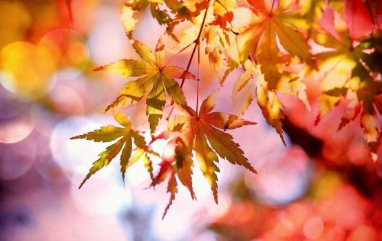 Pirmo reizi novērojumu vēsturē gaisa temperatūra 12.oktobrī pakāpusies virs +20 grādiem