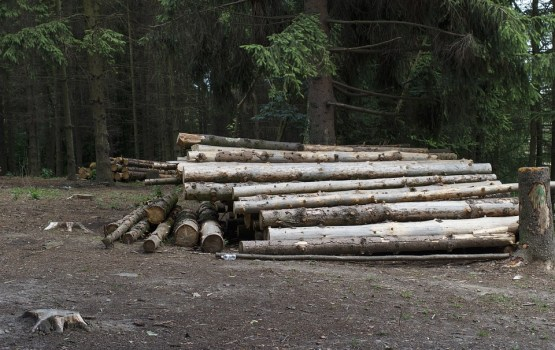 Publiskā apsriešana par koku ciršanu  notiks Višķos