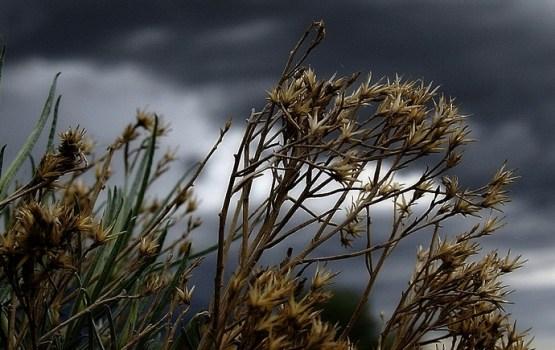 Diena būs vējaina, daudzviet uzpilinās lietus