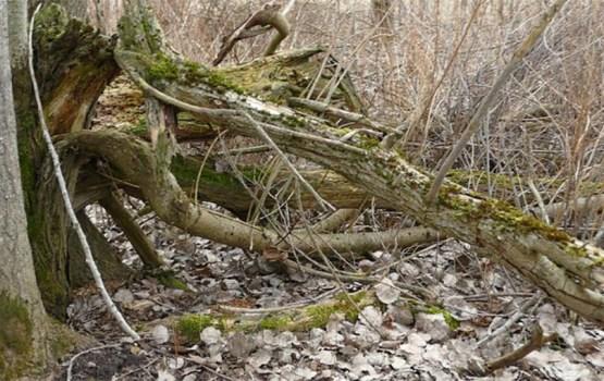 Mirušais regbists Dāvis Pērkons tika atrasts aizaugušā, biezā mežā ar daudziem kritušiem kokiem